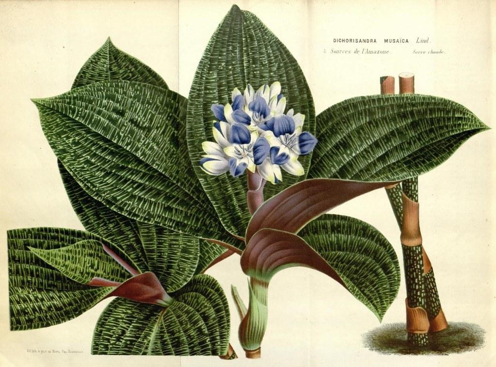 Biodiversity Heritage Library   Flickr